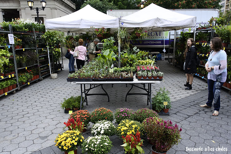 Plantas en el Union Square Greenmarket