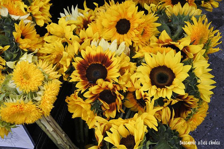 Flores (Union Square Greenmarket)
