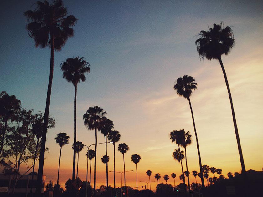 Me hace feliz el verano, el sol y las palmeras
