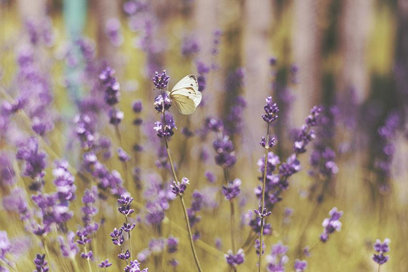 Naturaleza floreciendo en primavera