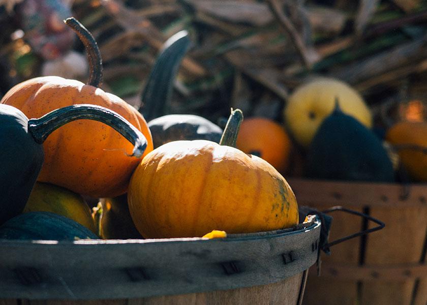 Calabazas en otoño