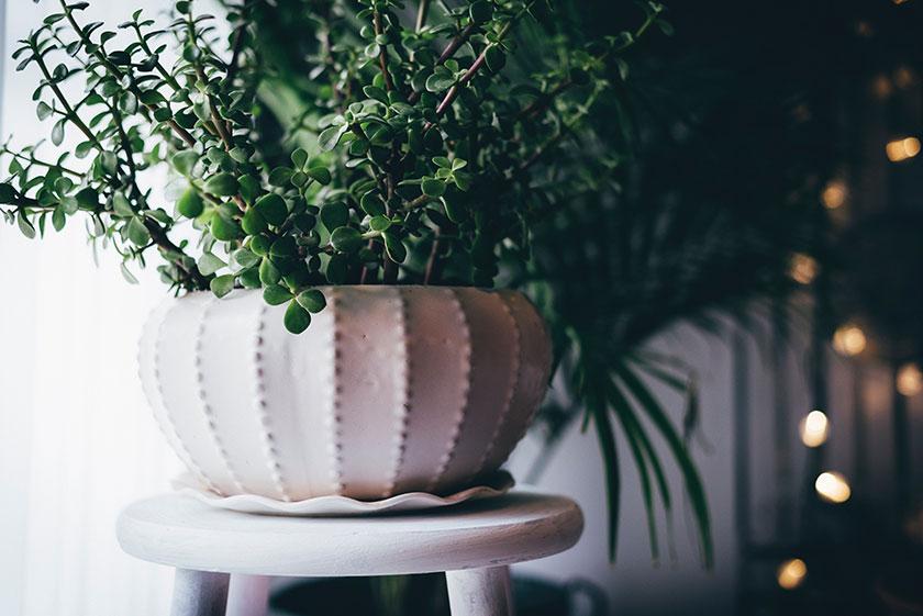 Cuidar de las plantas