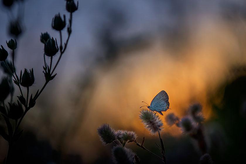 Mariposa en primavera