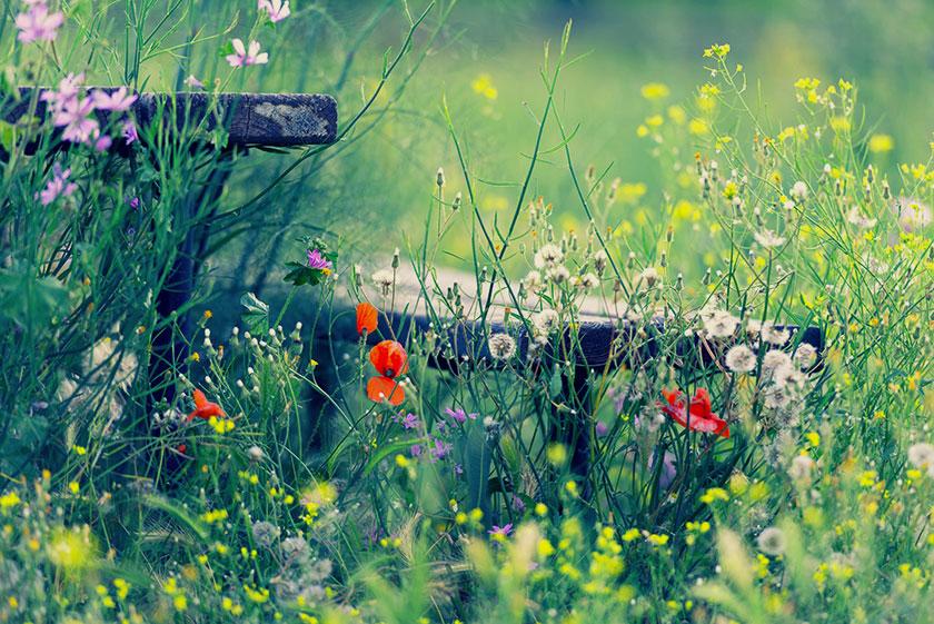 Paseos en primavera