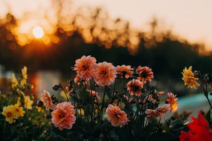 Fotos chulas en primavera